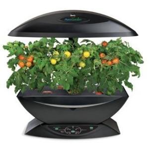 AeroGarden Tomatoes