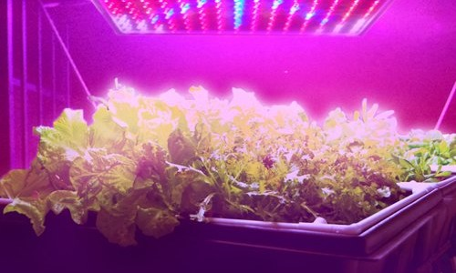 HQRP QUAD LED Grow Light