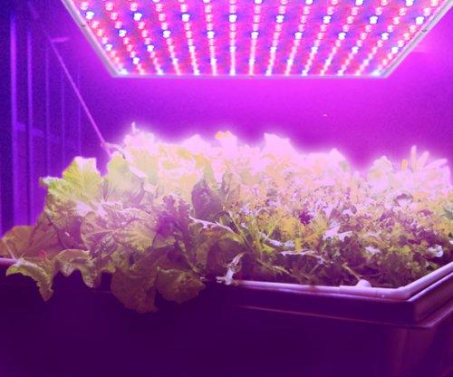 Led Grow Light 14w Blue Red Plant Light Hydroponic
